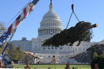 Árbol navideño arriba al Capitolio de Estados Unidos