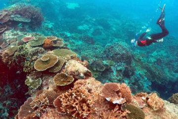 La Unesco no incluye la Gran Barrera de Coral de Australia en lista de patrimonio mundial en peligro