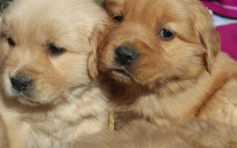 Cachorritos, gatos y perdones