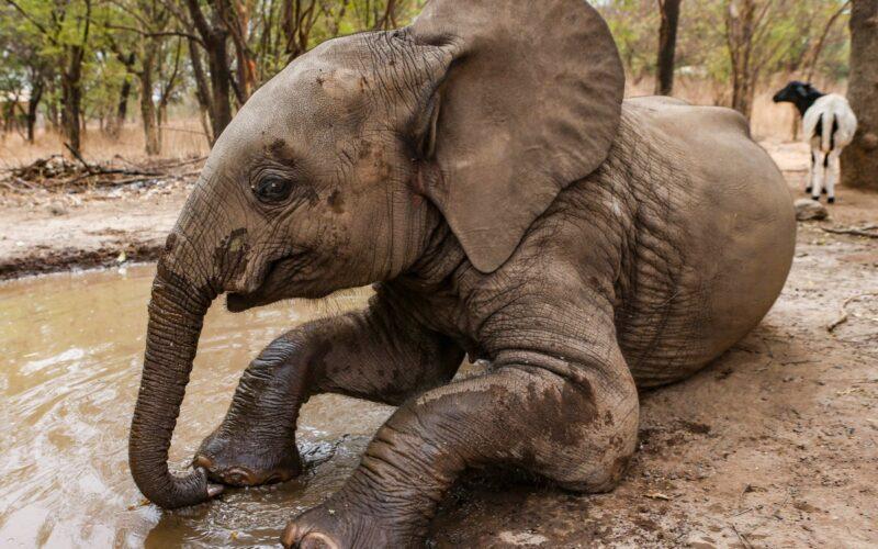 Nania, mamuts y adn
